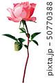ピンクのバラ一輪 50770388
