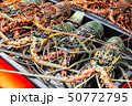 Catch of tropical rock lobsters 50772795