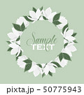 Vector magnolia flowers 50775943