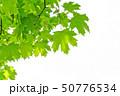 紅葉 爽やかな 新鮮の写真 50776534