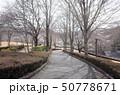 秋の公園の散歩道を歩く、群馬県甘楽公園 50778671