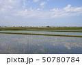 空 田畑 農作物の写真 50780784