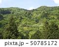 新緑・山 50785172