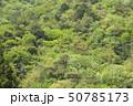 新緑・山 50785173