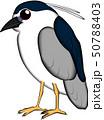 鳥 ゴイサギ イラスト かわいい系 50788403