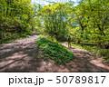 大山 新緑 自然の写真 50789817