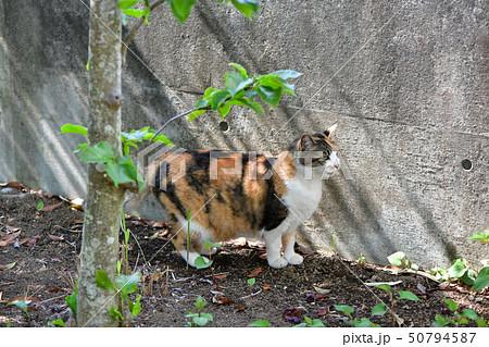 外猫 50794587