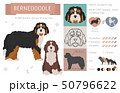 Designer, crossbreed, hybrid mix dogs collection 50796622