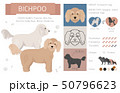 Designer, crossbreed, hybrid mix dogs collection 50796623