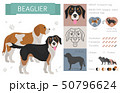 Designer, crossbreed, hybrid mix dogs collection 50796624