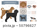 Designer, crossbreed, hybrid mix dogs collection 50796627
