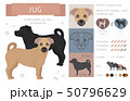 Designer, crossbreed, hybrid mix dogs collection 50796629