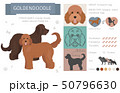 Designer, crossbreed, hybrid mix dogs collection 50796630