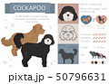 Designer, crossbreed, hybrid mix dogs collection 50796631