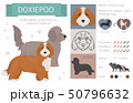 Designer, crossbreed, hybrid mix dogs collection 50796632
