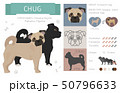 Designer, crossbreed, hybrid mix dogs collection 50796633