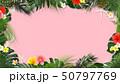 夏 フレーム トロピカルのイラスト 50797769