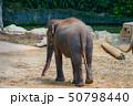 シンガポール動物園の象 50798440