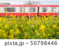 三浦海岸の菜の花畑と京急線 50798446