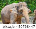 シンガポール動物園の象 50798447