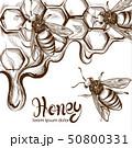 ハチ ミツバチ 蜂のイラスト 50800331