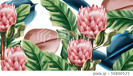 Ginger flowers tropic background Vector 50800525
