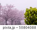 朝もやの中の桜 50804088