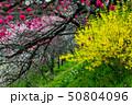花桃の里へ 50804096