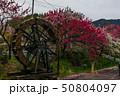 花桃と水車 50804097