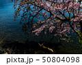 水面に映える桜 50804098
