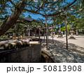 海 海岸 日本の写真 50813908