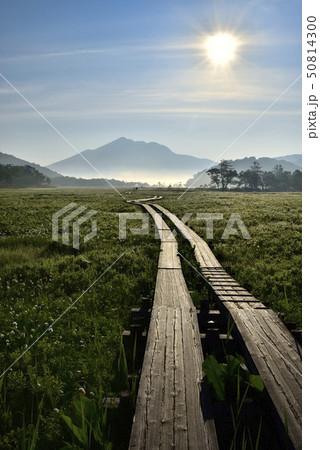 朝霧の尾瀬ヶ原にワタスゲと木道に燧ヶ岳と朝日 50814300