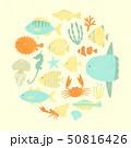 魚たち 50816426