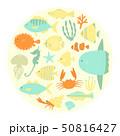 魚たち 50816427