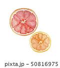 夏 トロピカルフルーツ グレープフルーツ オレンジ 水彩 イラスト 50816975
