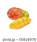 夏 トロピカルフルーツ マンゴー 水彩 イラスト 50816976