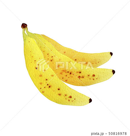 夏 トロピカルフルーツ バナナ 水彩 イラスト 50816978