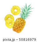 夏 トロピカルフルーツ パイナップル 水彩 イラスト 50816979