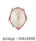 夏 トロピカルフルーツ ドラゴンフルーツ 水彩 イラスト 50816980