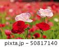 花の国(初夏) 50817140