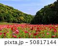 花の国(初夏) 50817144