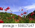 花の国(初夏) 50817147