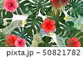 モンステラ プルメリア 葉のイラスト 50821782