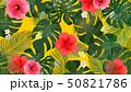 モンステラ プルメリア 葉のイラスト 50821786