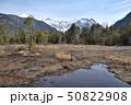 長野県 春の上高地 田代湿原と穂高連峰 50822908