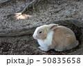 兎 うさぎ島 大久野島の写真 50835658
