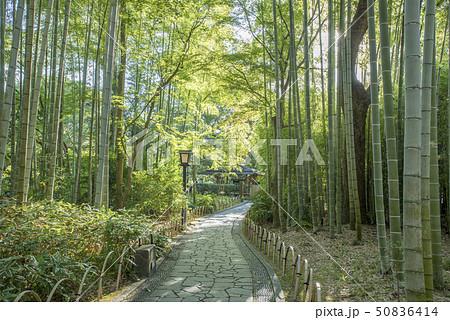 修善寺温泉 竹林の小径 50836414