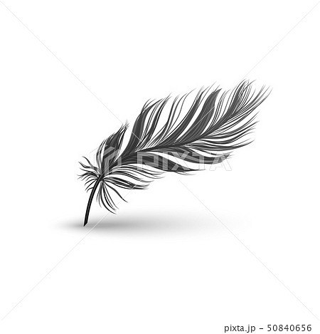 Black falling fluffy feather vector illustration isolated on white background. 50840656