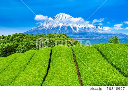 《静岡県》富士山と茶畑の風景 50846997