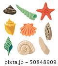 貝 貝がら 貝殻のイラスト 50848909